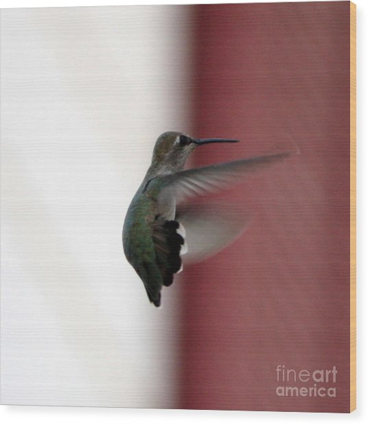 Hummingbird Changing Course Wood Print