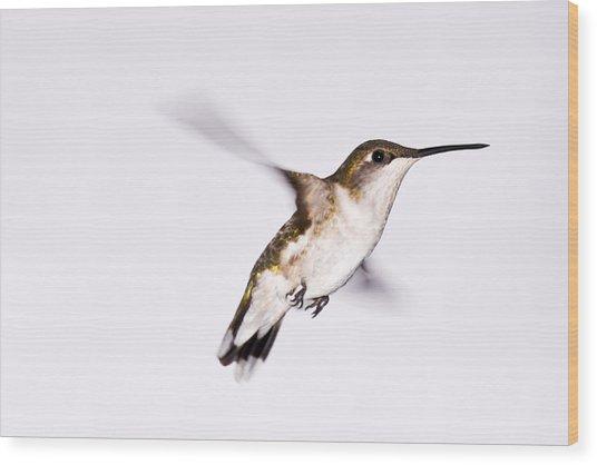 Hummingbird Wood Print by Edward Myers