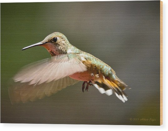 Hummingbird Facing Left Wood Print