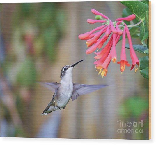 Hummingbird Happiness 2 Wood Print