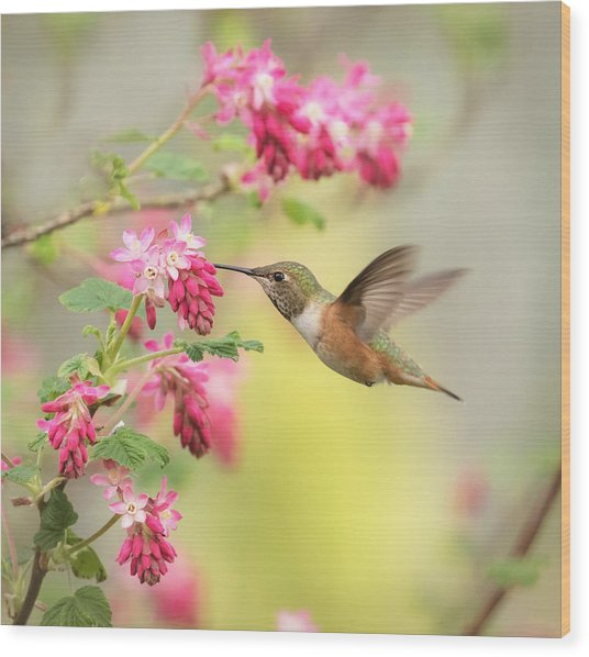 Hummingbird Heaven 2 Wood Print