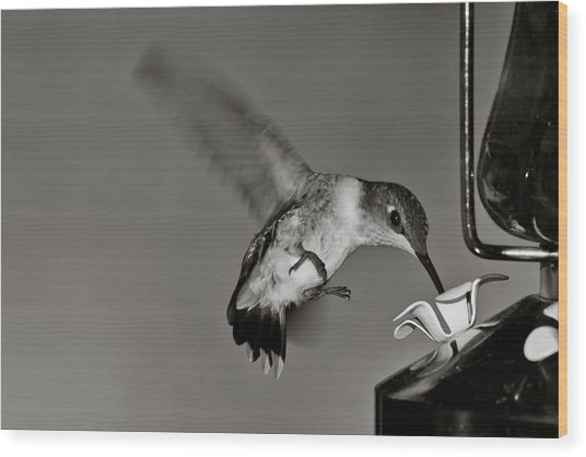 Hummingbird In Black And White Wood Print by Edward Myers