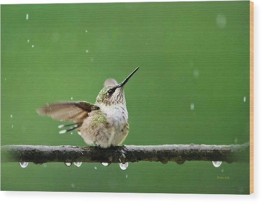Hummingbird In The Rain Wood Print