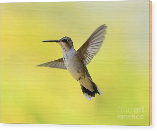 Hummingbird In Yellow Wood Print