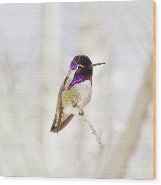 Hummingbird Larger Background Wood Print