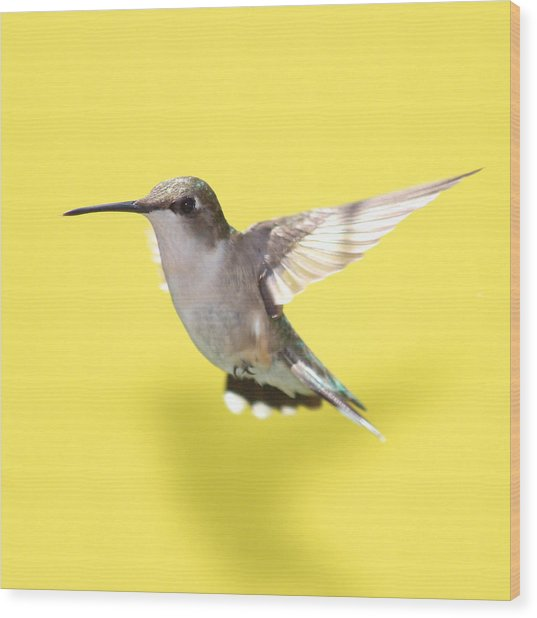 Hummingbird On Yellow 1 Wood Print