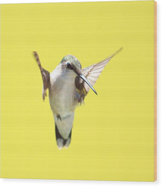 Hummingbird On Yellow 2 Wood Print