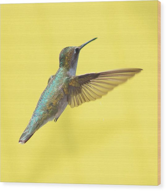 Hummingbird On Yellow 3 Wood Print