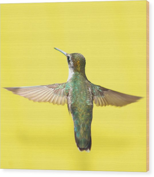 Hummingbird On Yellow 4 Wood Print