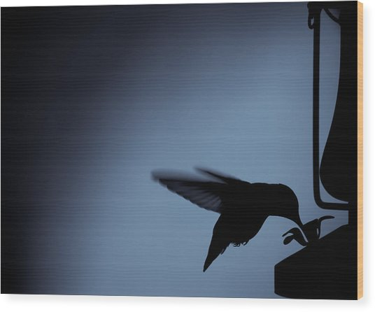 Hummingbird Silhouette Wood Print by Edward Myers