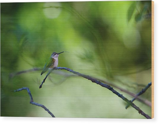 Wood Print featuring the photograph Hummingbird Sticks Out Tongue by Jane Melgaard
