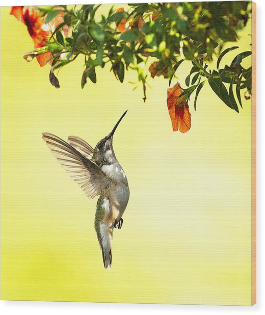 Hummingbird Under The Floral Canopy Wood Print