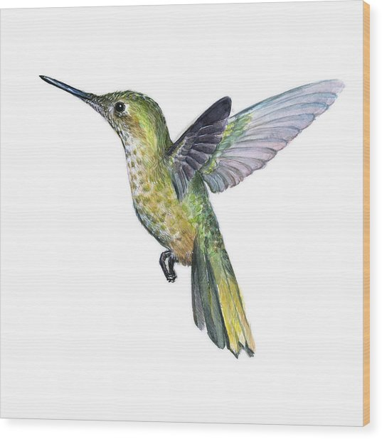 Hummingbird Watercolor Illustration Wood Print