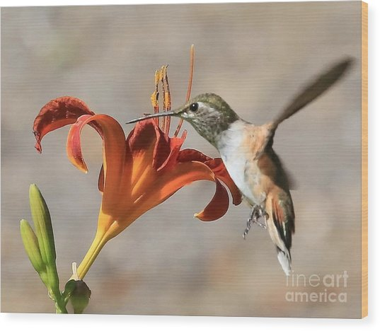 Hummingbird Whisper  Wood Print