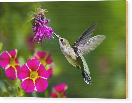Hummingbird With Flower Wood Print