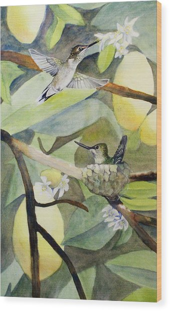Hummingbirds And Lemons Wood Print