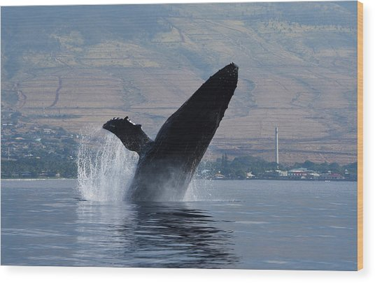 Wood Print featuring the photograph Humpback Whale Breach by Jennifer Ancker