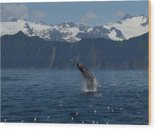 Humpback Whale Breach Seward Wood Print