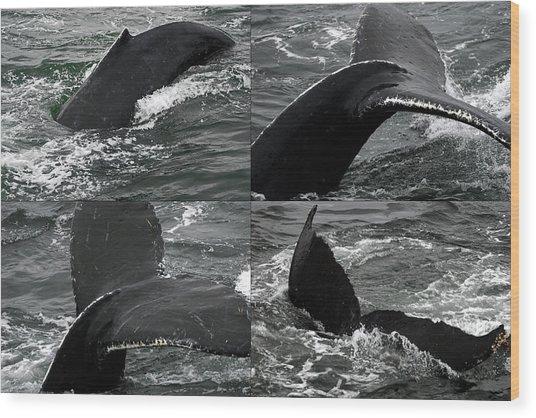 Humpback Whale Fluke Montage Wood Print