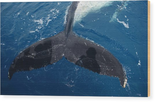 Humpback Whale Tail With Human Shadows Wood Print