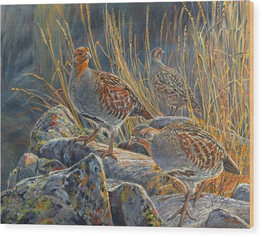Hungarian Partridges Wood Print