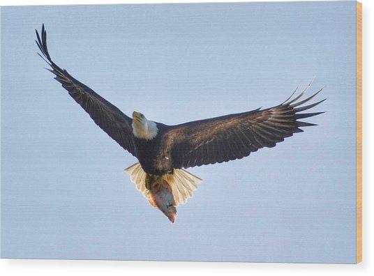 Hungry Eagle Wood Print