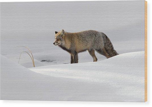Hunting For Breakfast Wood Print