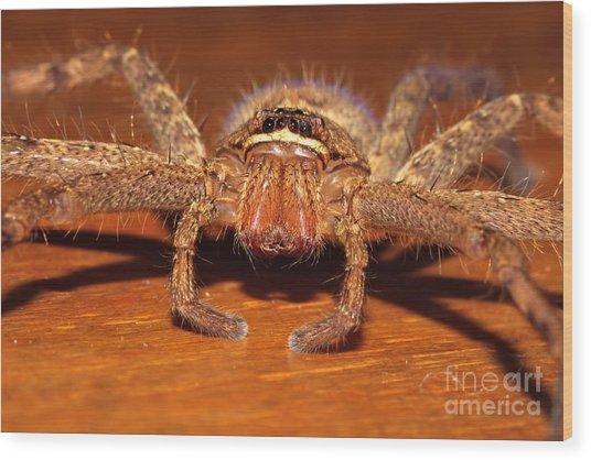 Huntsman Spider Wood Print