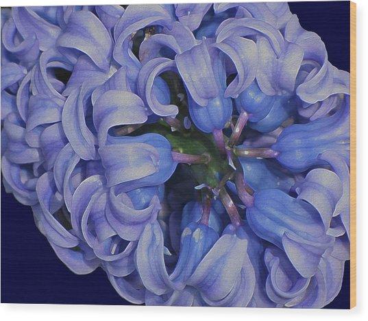 Hyacinth Curls Wood Print
