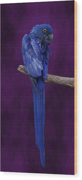 Hyacinth Macaw Panoramic Wood Print