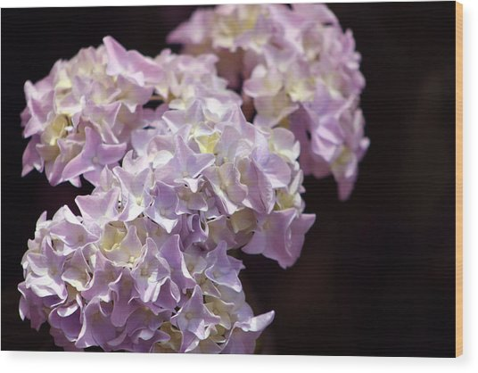 Hydrangea Wood Print by Evelyn Patrick