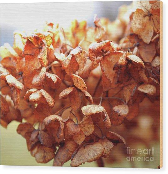 Hydrangea In Sunlight Wood Print