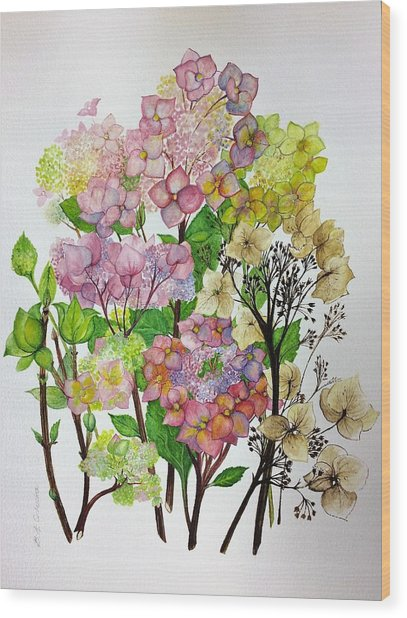 Hydrangea's Changing Colours Wood Print