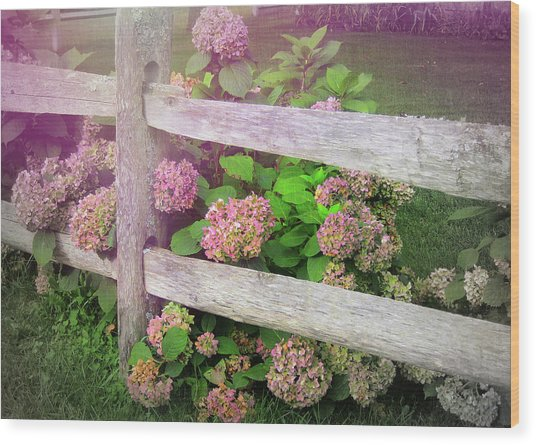 Hydrangeas Wood Print by JAMART Photography