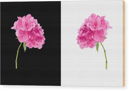 Hydrangeas On Black And White Wood Print