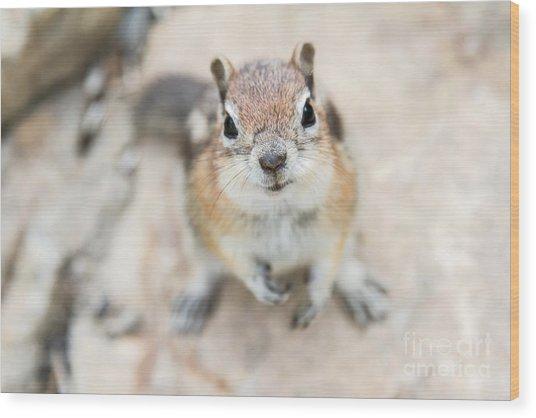 Hypno Squirrel Wood Print