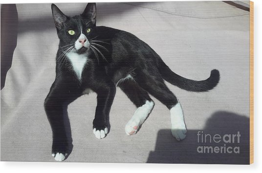 I Am Ceasar. Photo Of Black White Kitten Wood Print