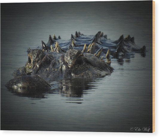 I Am Gator, No. 45 Wood Print