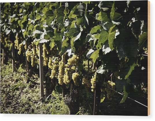 I Heard It Through The Grapevine Wood Print by Cabral Stock