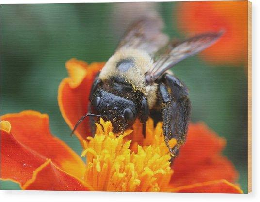 I Like Pollen  Wood Print by Jason Hochman