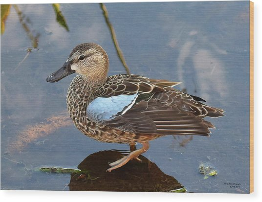 I Really Am A Green Winged Teal Wood Print