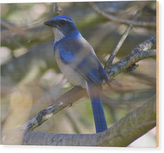 I Think I Found The Blue Bird Of Happiness Wood Print by Kerry Reed