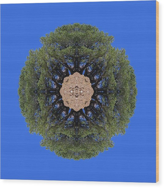 I Will Survive Tree Kaleidoscope Wood Print