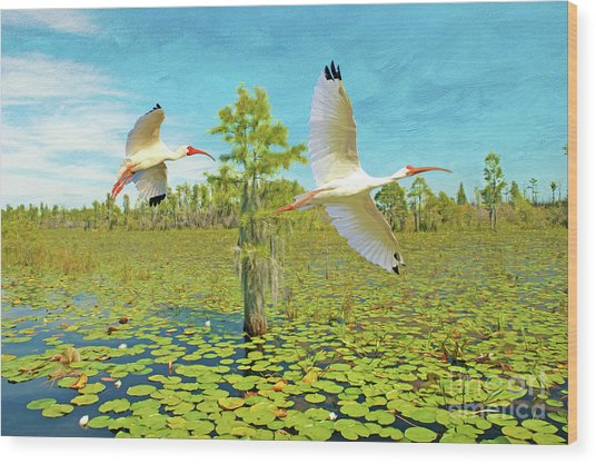 Ibis At Okefenokee Wood Print