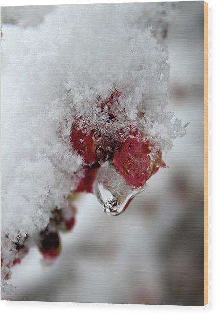 Ice Drip Wood Print