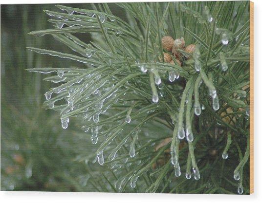 Iced Pine Wood Print by Kathy Schumann