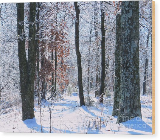 Icey Forest 1 Wood Print