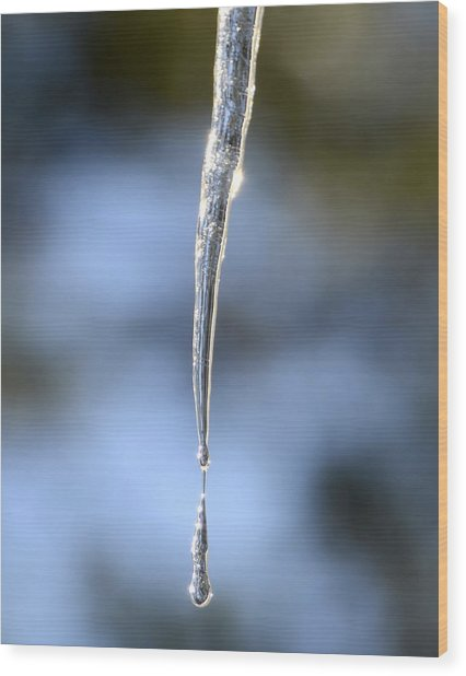 Icicles In Bloom Wood Print