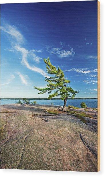 Iconic Windswept Pine Wood Print