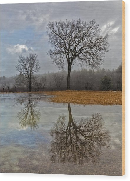 Icons - Henniker, New Hampshire Trees At The End Of Winter Wood Print